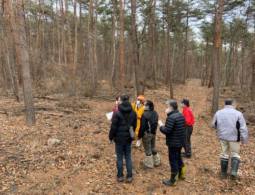 西部小学校北側国有林の伐採について